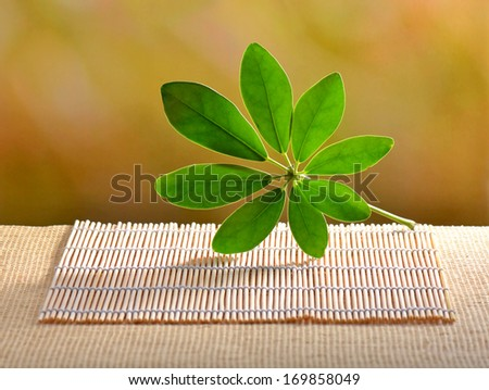 empty table with natural background
