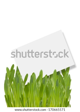 Empty tag for your text in natural green grass  isolated on white background. Element for design.
