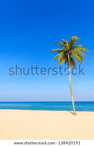 Empty tropical beach with coconut tree
