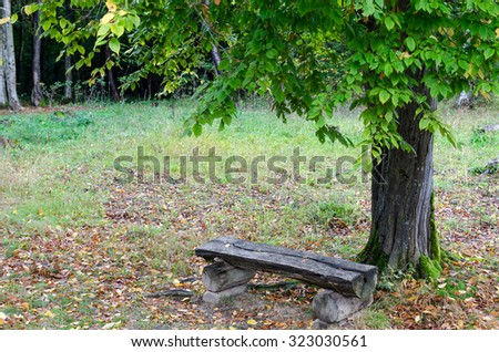 Empty wooden bench near a tree
