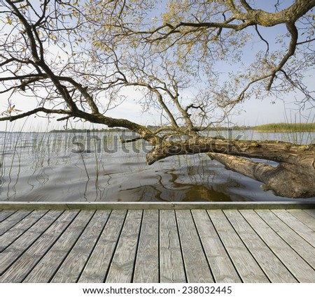 Empty wooden jetty on the lake shore with tree branches over lake water surface in the background - stock photo