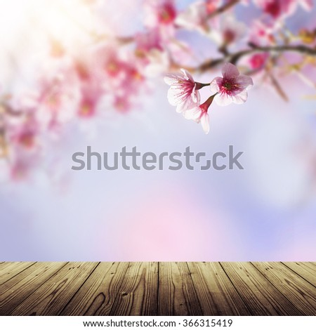 Empty wooden table and blue and pink background with cherry blossoms framing the bright vibrant sky with sunshine. Spring nature flower background. Sakura, Japan. - stock photo