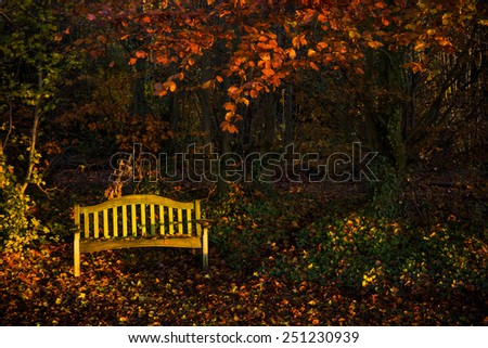 Empty yellow bench on a beautifully coloured autumnal morning. - stock photo