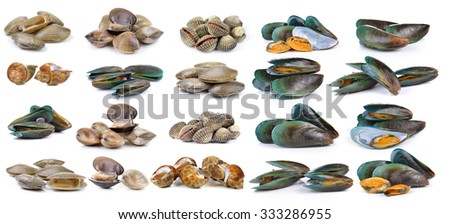 enamel venus shell, Clam shellfish, Surf clam, mussel,  spotted babylon on white background - stock photo