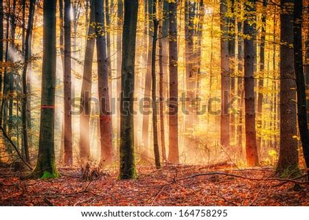 Enchanted Autumn Forrest - stock photo