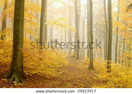 Enchanted autumn path leading through the beech forest in dense fog. - stock photo