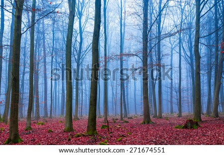 Enchanted forest in fog in blue and pink. - stock photo
