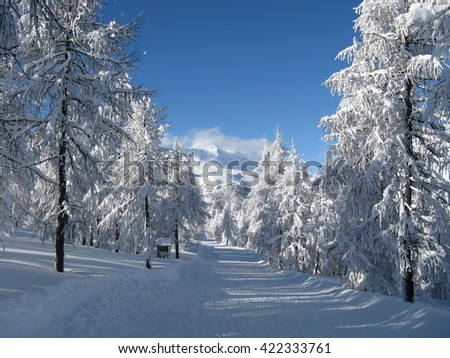 enchanted landscape after heavy snowfall