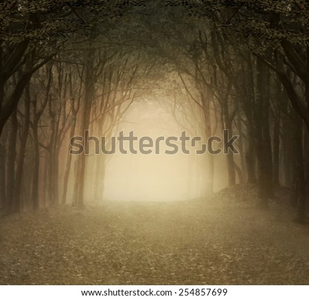 Enchanted nature series - Gold foggy forest - stock photo