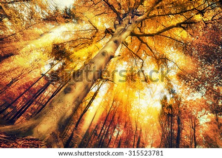Enchanting forest scenery in autumn, with intense moody light falling through the foliage - stock photo