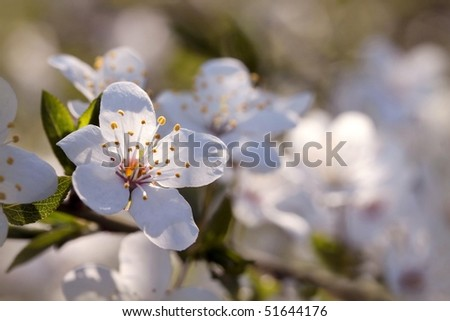 Enchanting spring flowers on the tree lit by the morning sun. - stock photo
