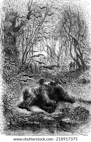 Encounter an elephant eats by vultures, vintage engraved illustration. Le Tour du Monde, Travel Journal, (1872).