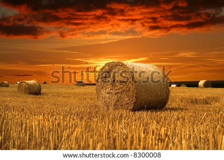 End of day over field with hay bale and birds - stock photo