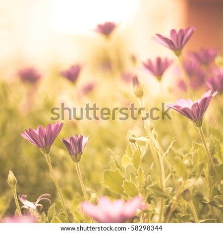 End summer flowers - stock photo