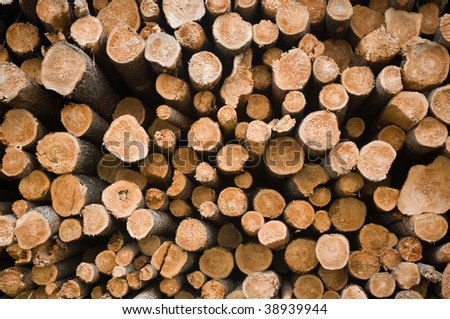 end view of a large stack of pine logs drying in the sun - stock photo