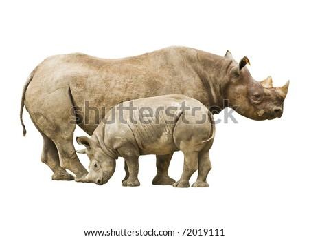Endangered Black Rhinoceros - stock photo