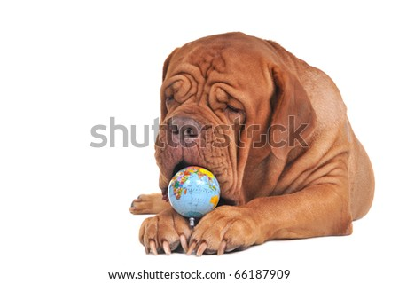 Endangered World Concept with Globe and Dog - stock photo