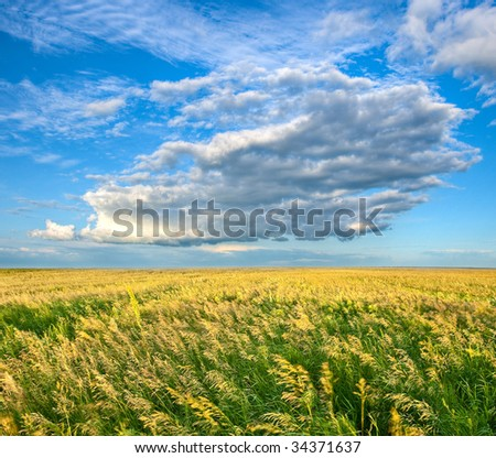 endless field under beautiful skies