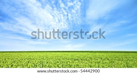 Endless wheat field in spring - stock photo