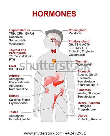 Endocrine gland hormones human silhouette highlighted em ilustrao endocrine gland and hormones human silhouette with highlighted red color internal organs ccuart Image collections