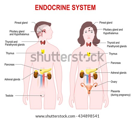 essay questions on the endocrine system Essay writing service questions & answers endocrine system disorders: diabetes - essay example let us find you another essay on topic endocrine system.