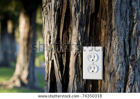 energy concept, plus into the energy of living trees, redwood tree with light socket, nice late day lighting - stock photo