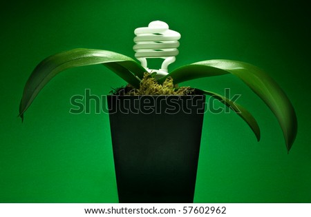 Energy preservation concept with lightbulb growing plant - stock photo