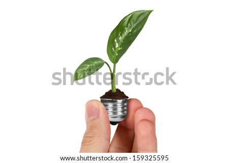 Energy saving concept, hand holding plant growing in electric light bulb, isolated on white background. - stock photo