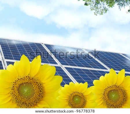 Energy solar in friendly sunflowers