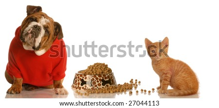 english bulldog and kitten sharing food dish - stock photo