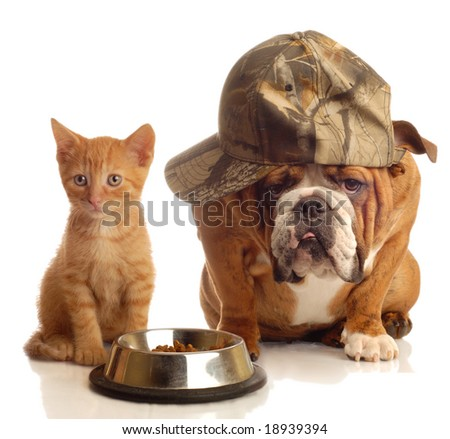 english bulldog and orange  kitten sitting at food dish - stock photo