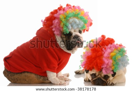 english bulldog and pug dressed up as clowns - stock photo