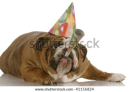 english bulldog birthday dog wearing hat and blowing on horn - stock photo