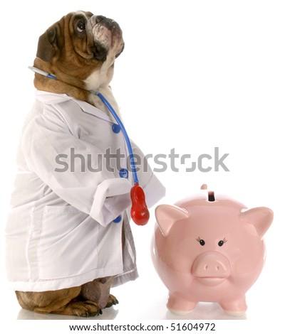 english bulldog doctor standing beside piggy bank - stock photo