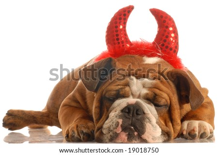 english bulldog dressed up as a devil - stock photo