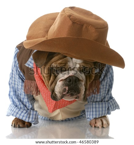 english bulldog dressed up in cowboy costume with depressed expression - stock photo