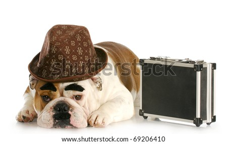 english bulldog dressed up like a business man with dark eyebrows and mustache on white background