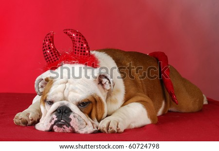 english bulldog dressed up like a devil on red background - stock photo