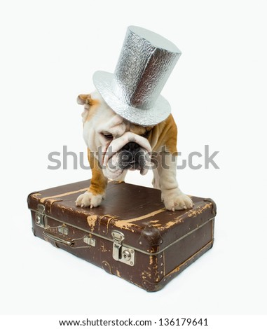 English bulldog in the silver top hat with suitcase