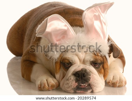 english bulldog laying down dressed up as easter bunny