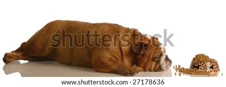 english bulldog laying down sleeping in front of full bowl of food - stock photo