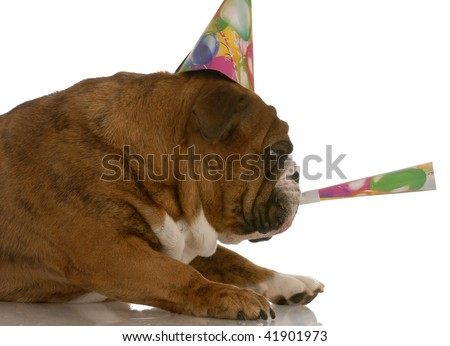 english bulldog party hat blowing on horn - stock photo