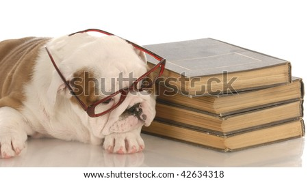 english bulldog puppy laying down beside a stack of books - stock photo