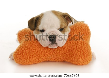 english bulldog puppy resting head on stuffed bone with reflection on white background - stock photo