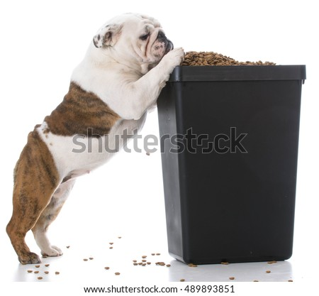Dog Food Stroage
