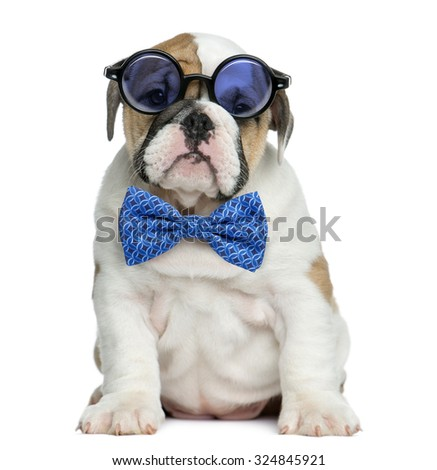 English bulldog puppy wearing glasses and a bow tie in front of white background - stock photo
