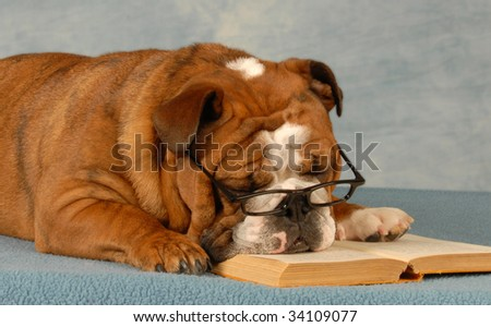 english bulldog sleeping with reading glasses and a novel