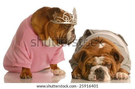 english bulldog tired of another dog giving the diva routine - stock photo