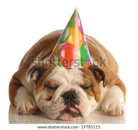 english bulldog wearing birthday party hat isolated on white background - stock photo