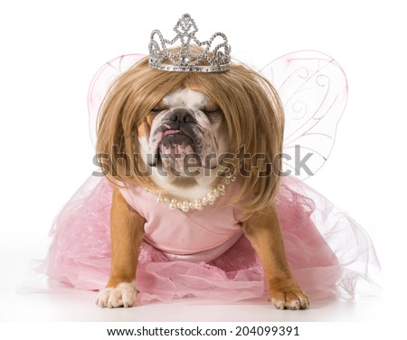 english bulldog wearing blonde wig and princess costume - stock photo